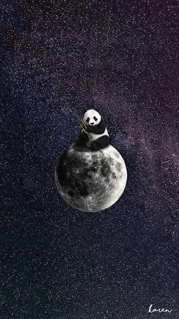 الباندا,كونغ فو باندا,حيوانات,باندا,كائن الباندا,الباندا ببجي,انت,لعنة الباندا,بطل الدروب