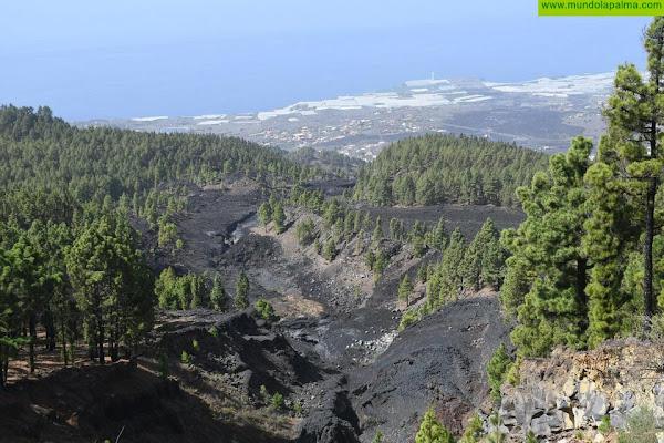 El Cabildo de La Palma dedica la pista forestal entre El Paso y Fuencaliente a la  memoria de Fran Santana
