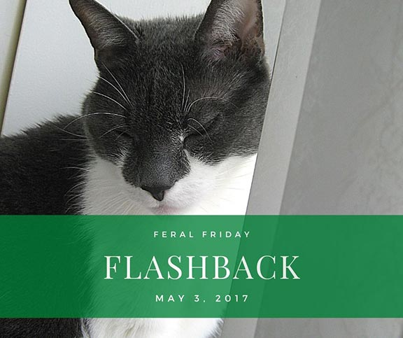Feral Friday Flashback