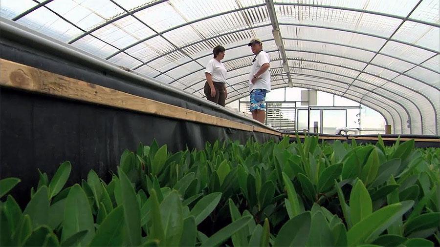 Mote Aquaculture Park Habitat Restoration