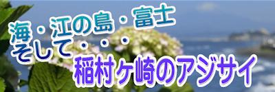 稲村ケ崎アジサイ