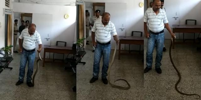 MANDSAUR के एसपी ऑफिस में नाग-नागिन की आवाजाही   MP NEWS