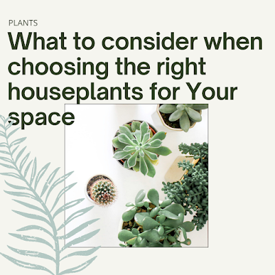 What to Consider When Choosing the Right Houseplants for Your Space