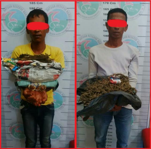 """Dua Pemuda """"Meukat Ganja"""" diamankan Satres Narkoba Polres Aceh Tamiang"""