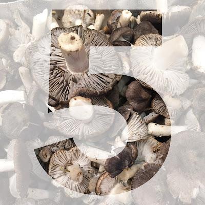 5-senses-monday-353-chez-agnes-collage