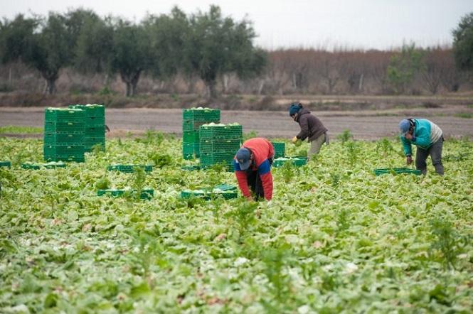 Punto por punto: así es el protocolo para productores y trabajadores agrícolas