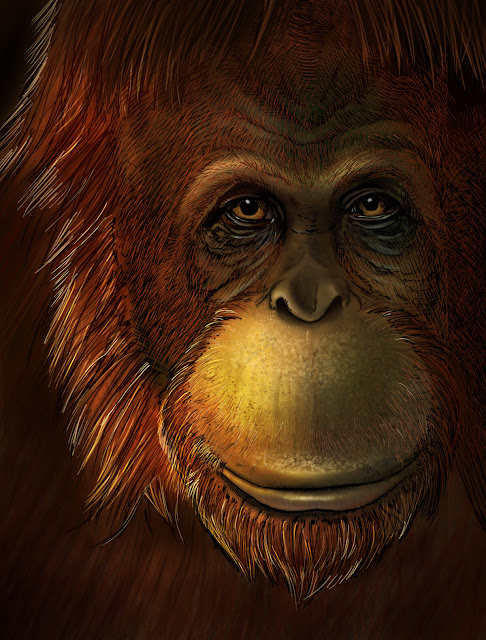 Extinct giant ape directly linked to the living orangutan