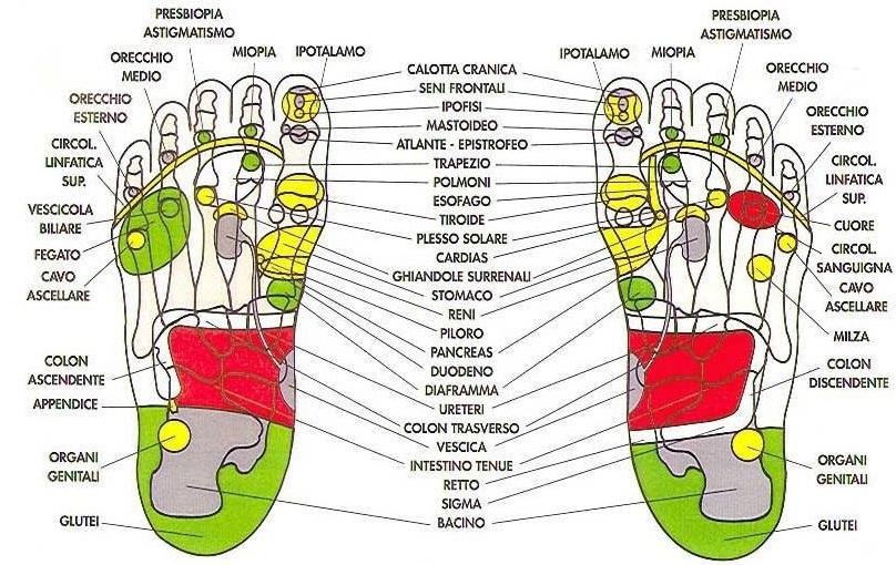 http://1.bp.blogspot.com/-J_8b2Wugv5M/UXT7jWcLAKI/AAAAAAAAANw/5EOfDxBdEsc/s1600/riflessologia_mappa_piede_g.jpg