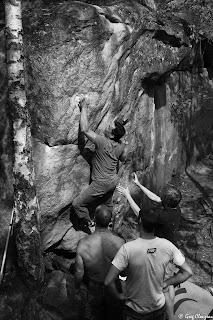 l'arbuste sacré 6A Gorge aux Chats Trois Pignons Fontainebleau