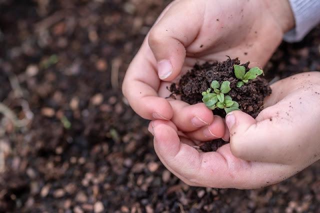 Feira No Shopping Patteo Olinda   oficinas de cuidados com plantas para as crianças