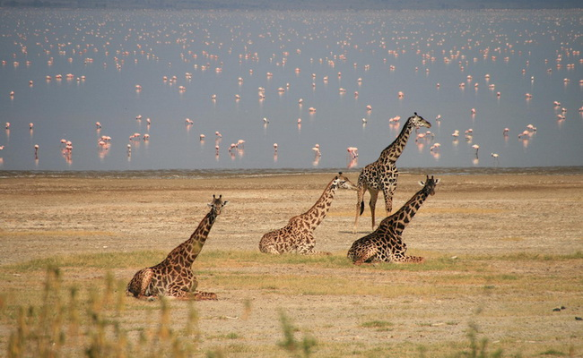 Xvlor.com Lake Manyara National Park is conservation area to protect soda lakes
