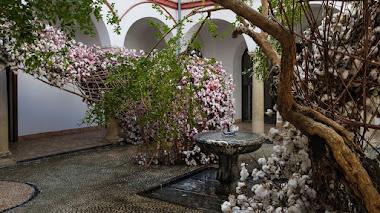 Flora 2019. Instalaciones florales en 5 patios monumentales de Córdoba