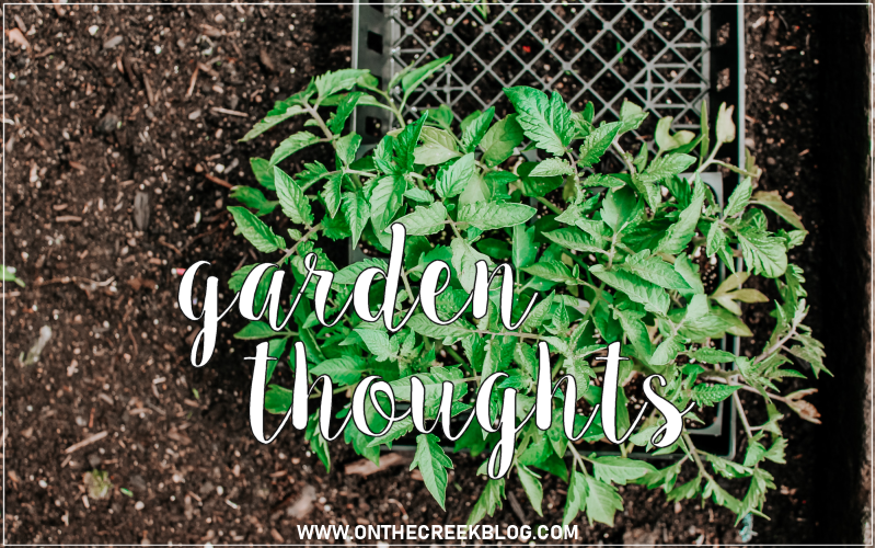 Some thoughts on my 2019 garden!