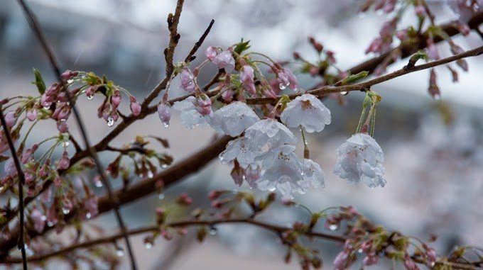 Esőt és szelet jósolnak a meteorológusok