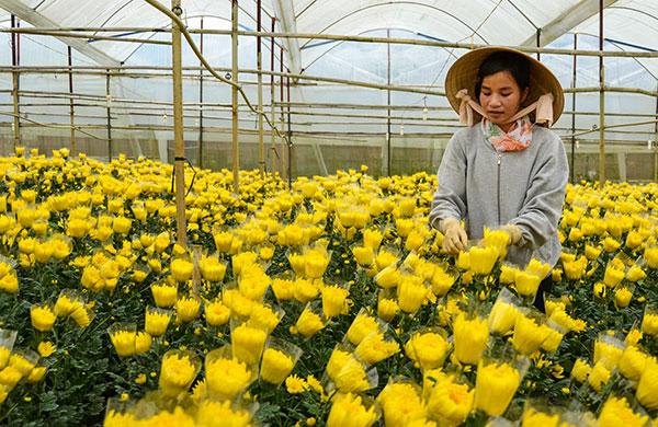 Xuất khẩu lao động Nhật Bản làm nông nghiệp gì