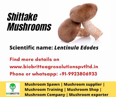 Shittake mushrooms