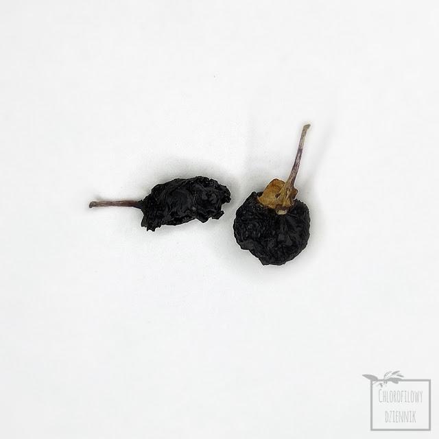 Czarna jagoda goji (Lycium ruthenicum) - black goji, russian thornbox, black wolfberry. Suszone owoce czarnej jagody goji, chińska i tybetańska medycyna naturalna, niebieska herbata, napar z jagody, z czego jest niebieska herbata, jak zrobić niebieską herbatę z jagód goji, właściwości niebieskiej herbaty i smak, właściwości zdrowotne, bezpieczeństwo, przygotowanie, pochodzenie, roślina, uprawa, nasiona, owoce, jak siać czarną goji?