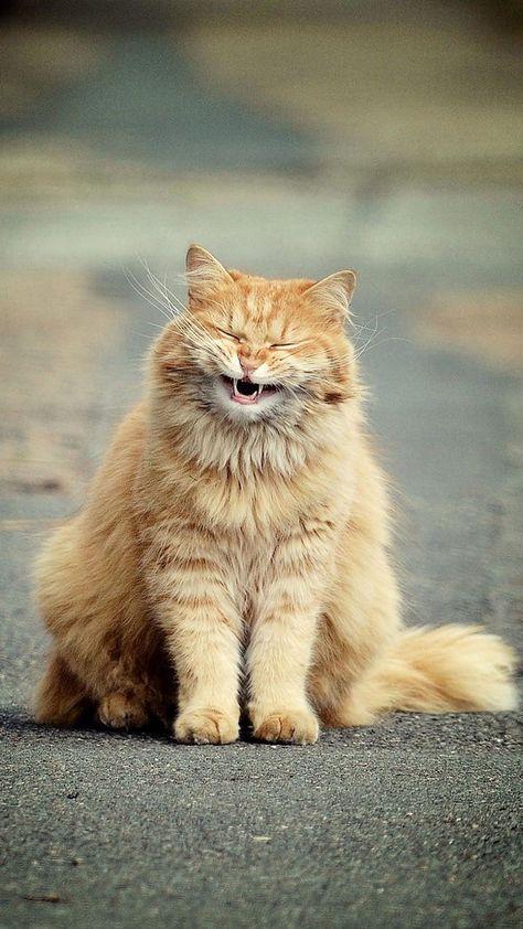 Tải ảnh mèo cute