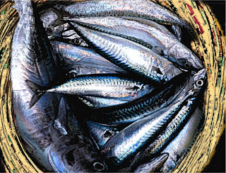 PPP scheme to mass produce fish takes off in Lagos 1