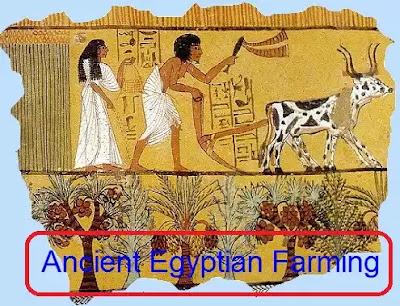 Ancient Egypt Basin irrigation