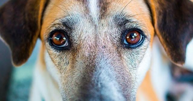 Τα σκυλιά μπορούν να καταλάβουν έναν κακό άνθρωπο λένε οι επιστήμονες