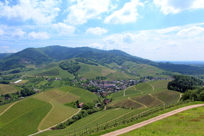 Weinpanorama-Wanderweg in Durbach