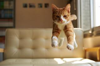¿Por qué dicen que los gatos tienen 7 vidas?