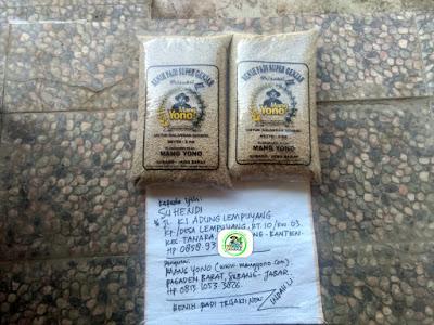Benih padi yang dibeli    SUHENDI Serang, Banten.  (Sebelum packing karung ).