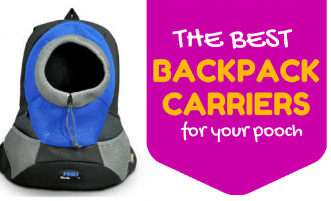 Going out with your dog? Our Top Best Dog Carriers that will make your travel easier