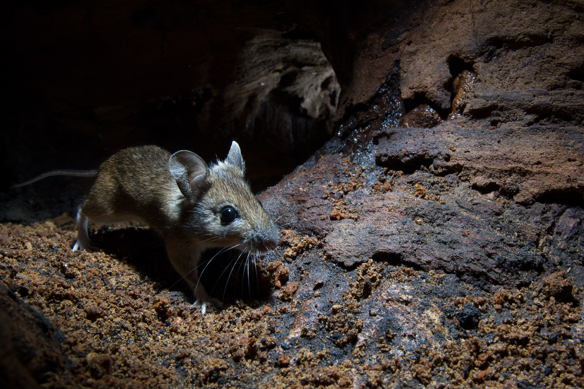 Genetic evidence suggests early mammals were nocturnal