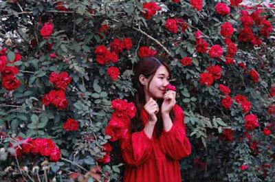 hoa hồng cổ sơn la rực rỡ tháng tư