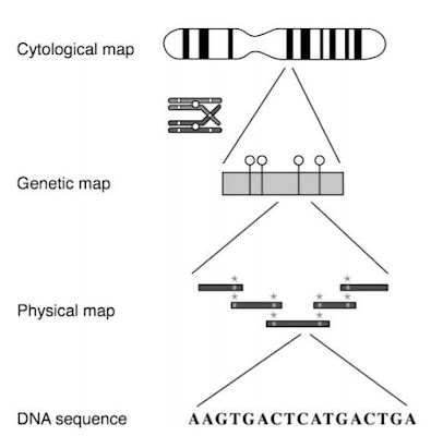 GENOME WIDE ANALYSIS: Genome mapping,assembly and comparison (#bioinformatics)(#biochemistry)(#biotechnology)(#ipumusings)