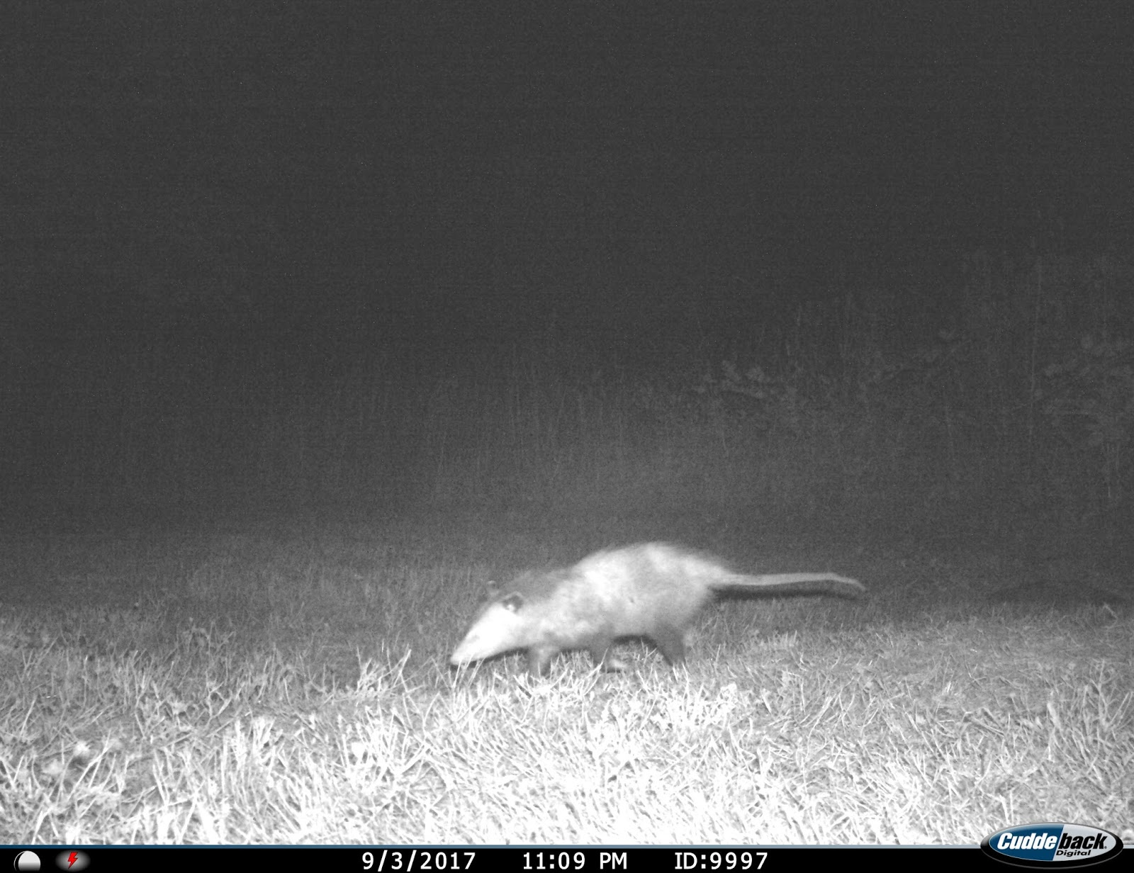 garden grumbles and cross stitch fumbles september trail camera