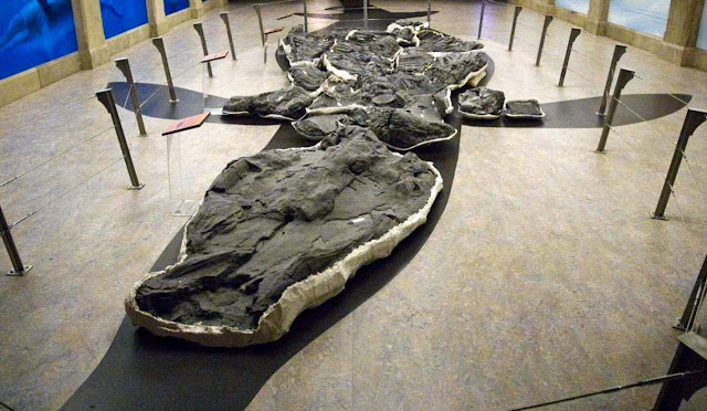 Giant Ichthyosaur Found: Bone From One of Largest Animals Ever