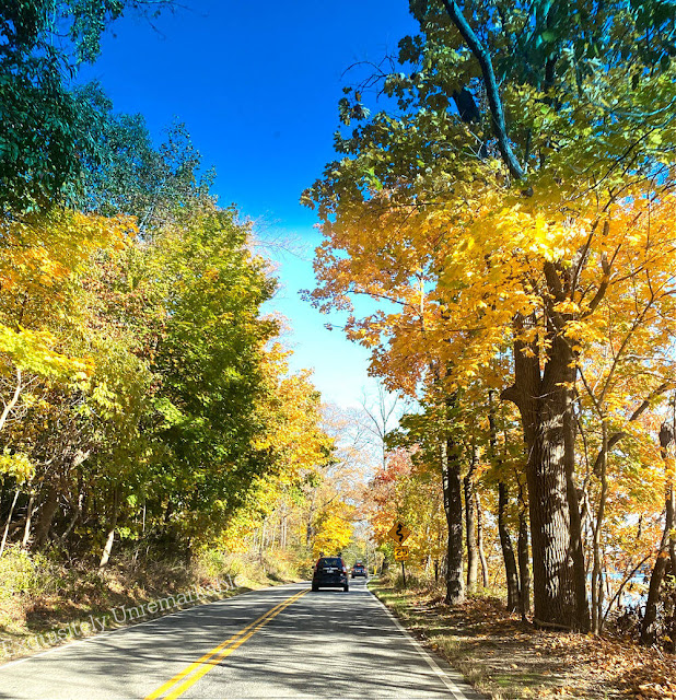 Fall trees changing color lining a road as car pass