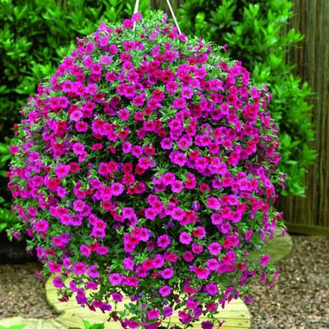 Pictures Of Beautiful Flowers In Hanging Baskets