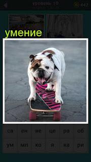 собака катается на доске, показывая свое умение 667 слов 10 уровень