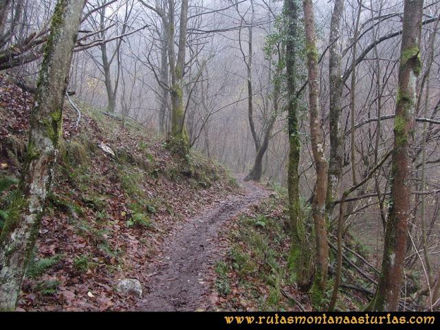 Ruta de las Xanas y Senda de Valdolayés: Atravesando el bosque