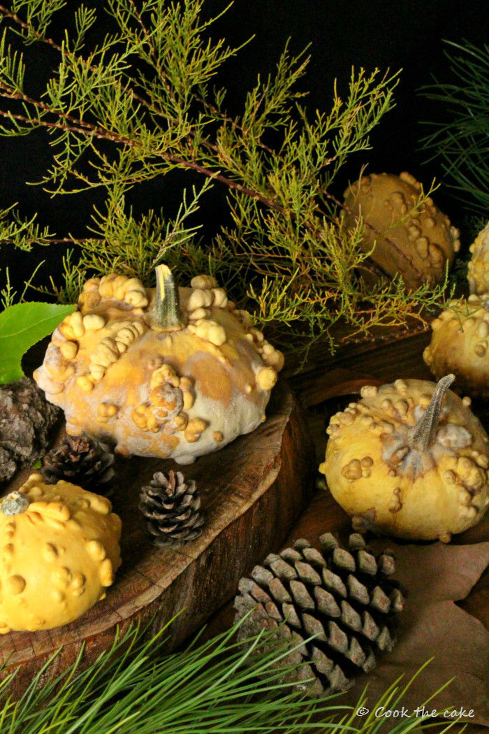 pumpkin, calabazas, otoño, autumn, fall