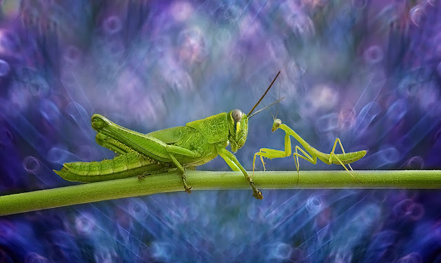 Insect Macro Photography by Nordin Seruyan