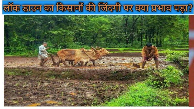 lockdown news today hindi |What is the impact of lockdown in the life of farmers?