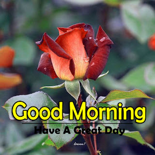 New Good Morning 4k Full HD Images Download For Daily%2B72