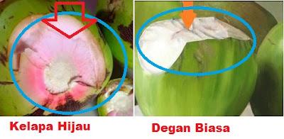 membedakan kelapa hijau asli