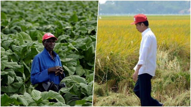 Indeks Pangan Indonesia Lebih Buruk dari Zimbabwe, Tengku: Ironis, NKRI Negara Agraris