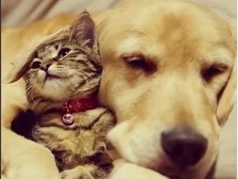 5 cuidados para ter antes de adotar um cachorro ou um gato