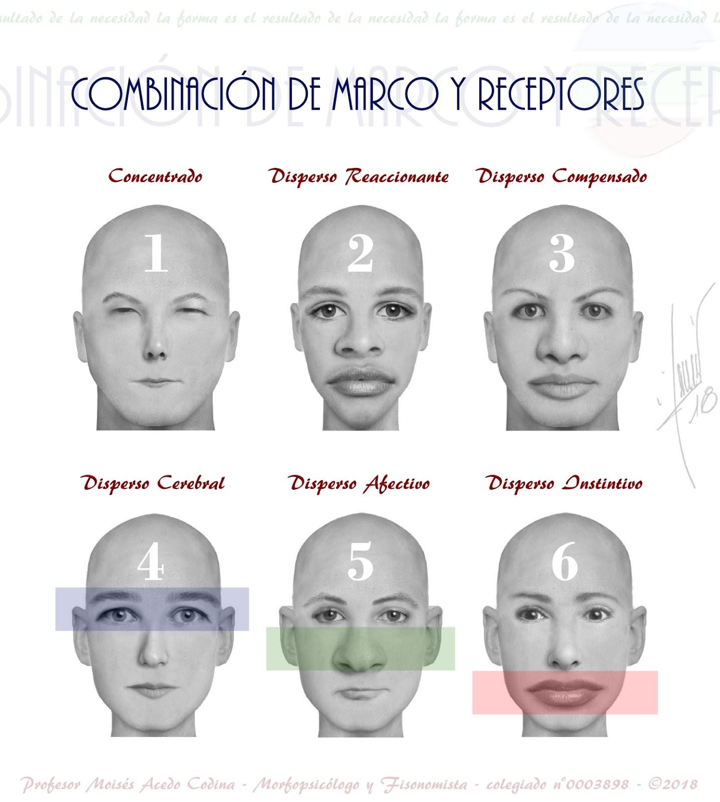 BLOGGER WWW.MORFOPSICOLOGIA.ORG: COMBINACIÓN DE MARCOS Y RECEPTORES