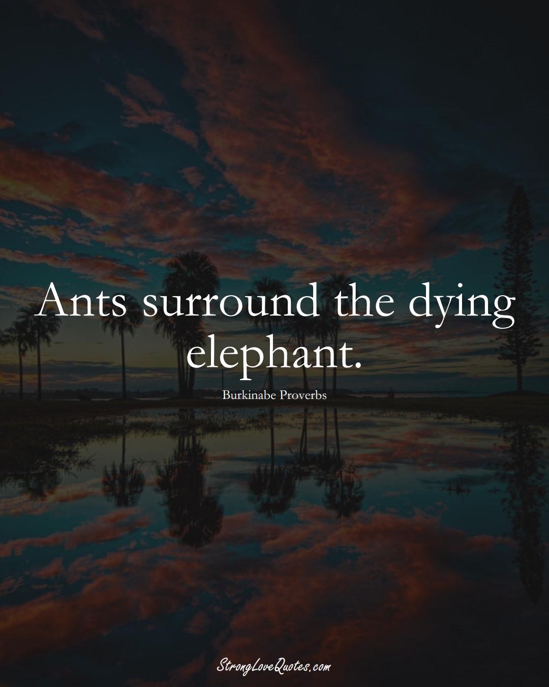 Ants surround the dying elephant. (Burkinabe Sayings);  #AfricanSayings