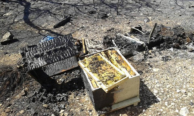 Νέα φωτιά έκαψε τα μελίσσια: Μεγάλη προσπάθεια για να σωθούν όσα δεν πρόλαβε η φωτιά...