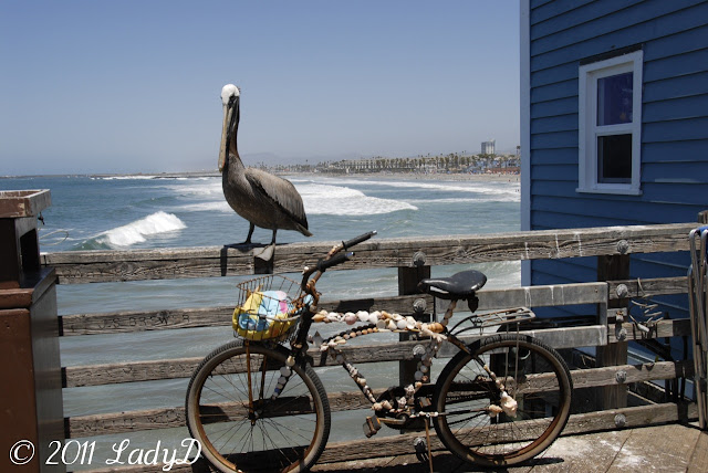 Pelican and Bicycle: LadyD Books