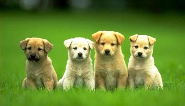Tips dan Panduan Bila Ingin Memelihara Anjing